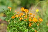 四季の花〜春編〜季節の花25選