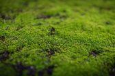 苔を愛でるのは日本だけ!?日本人の美意識と深くかかわる苔について考えよう