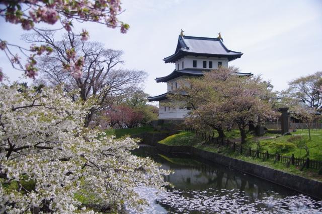 松前城のさくら