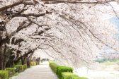 花見は心の文化~昔から日本人が桜を愛でる花見とは