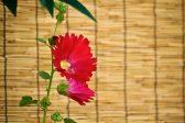 賢く使って夏を涼しく、快適に!簾(すだれ)と葦簀(よしず)の違いって?