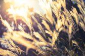 秋の七草に親しもう。七草の種類と楽しみ方色々
