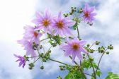 四季の花〜秋編〜季節の花25選