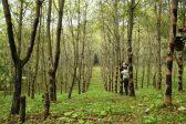 漆産業を支える「漆林フォレスター」|岩手県二戸市の地域おこし協力隊求人募集情報